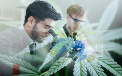 Cannabis Research Revelations